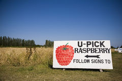 U Pick Rasberry Sign Royalty Free Stock Photo