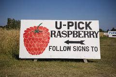 U Pick Raspberry Sign Royalty Free Stock Photo