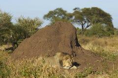 Uśpiony termitu kopem Zdjęcia Royalty Free