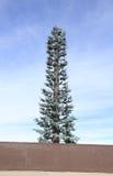 U.S.A., area albero per bandiera/dell'Arizona: Torre travestita della trasmissione fotografia stock libera da diritti