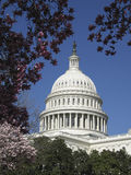 U.S. Capitol Dome. Framed by cherry blossoms Royalty Free Stock Image
