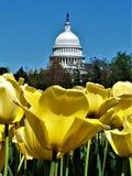 U S Capitol wydźwignięcie obrazy stock