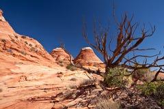U.S.A. - colline del coyote - la formazione dell'onda Fotografie Stock