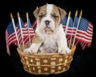 U.S.A. Puppy Fotografie Stock