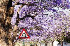 U-turn road sign against beautiful purple flowers of blossoming Stock Photo