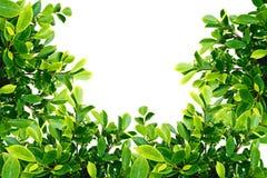 U vorm Groen blad Stock Foto
