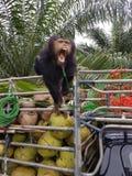 Używa kokosowego zdjęcie royalty free