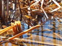 Używa wiosny wodę godzić światło i ocieniać fotografia stock