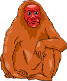 Uakari animal cartoon illustration. Cartoon Illustration of Funny Bald Uakari Monkey Primate Animal Stock Photo