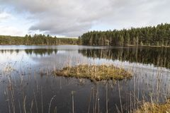 Uath Lochan and Forest at Glen Feshie in the Cairngorms. Uath Lochan at Glen Feshie in the Cairngorms National Park of Scotland Stock Image