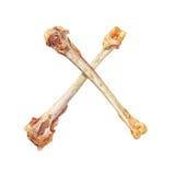 Ubóstwa pojęcie Dwa krzyżującej kurczak kości odizolowywającej na bielu Obraz Royalty Free