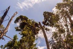 Ubatuba plaży drzewa Fotografia Stock
