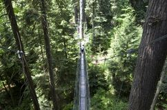 UBC植物园机盖步行 库存照片