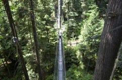 UBC botanical garden canopy walk Stock Photos