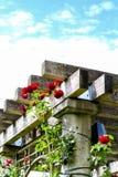 UBC ogród różany Vancouver, Kanada Obrazy Stock