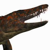 Uberabasuchus dinosaura głowa Obrazy Royalty Free