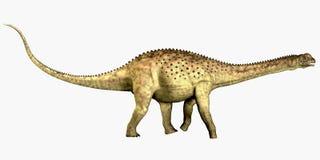 Uberabatitan Dinasaur on White. Uberabatitan was a herbivorous sauropod dinosaur that lived in the Cretaceous Period of Brazil Stock Photography