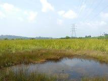 Ubicación hermosa del arroz-campo de las fotos naturales de la agricultura foto de archivo libre de regalías
