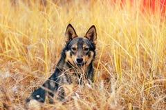 Ubicazione del cane nell'erba Fotografie Stock
