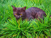 Ubicazione del gatto nero sull'erba verde Immagine Stock Libera da Diritti