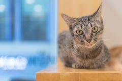 ubicazione del gatto sulla scala immagine stock