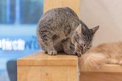 ubicazione del gatto sulla scala fotografia stock libera da diritti