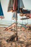 Ubicazione del gatto sulla spiaggia Immagine Stock