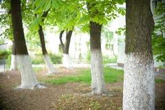 Ubierający drzewa fotografia royalty free