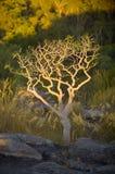 Ubirr Kakadu Fotografia Stock Libera da Diritti