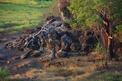 Ubirr kakadunationalpark, Australien Arkivbild