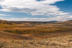 Żubra raj w Yellowstone parku narodowym obraz royalty free