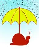 Ubrella Fotos de Stock