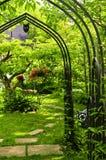 ubriacone verde del giardino Immagini Stock