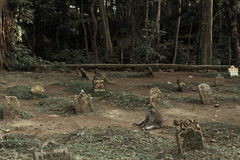 Ubud,印度尼西亚- 2013年2月10日:神圣的猴子森林圣所的公墓在Ubud,巴厘岛,印度尼西亚 库存图片