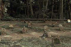 Ubud, Ινδονησία - 10 Φεβρουαρίου 2013: Νεκροταφείο στο ιερό δασικό άδυτο πιθήκων σε Ubud, Μπαλί, Ινδονησία Στοκ Εικόνες