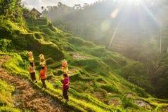 Ubud, Бали - 29-ое июля 2016 Показывать одежду и корзины традиционных балийских женщин церемониальную предложений индусского виск стоковые фотографии rf