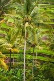 Ubud绿色 免版税图库摄影