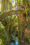 Ubud-Affe-Waldflusspanorama Stockfoto