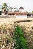 Ubud Bali Royaltyfri Foto