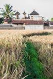 Ubud Bali Arkivbilder