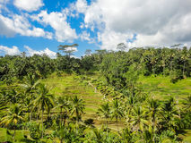 Ubud, Bali Fotografia Stock Libera da Diritti