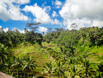 Ubud, Bali Immagini Stock