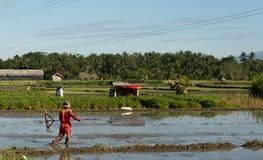 Ubud, Bali, Indonesia- May 7, 2019 : Unitedtified man works at rice field in Ubud, Bali, Indonesia royalty free stock photo