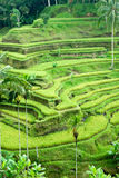 Ubud, Bali, Indonezja. fotografia stock