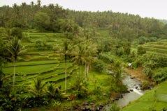 Ubud, Bali-Reis-Terrassen stockfotografie