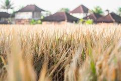 Ubud Bali Royalty Free Stock Photo