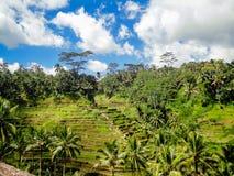 Ubud, Bali Stock Images