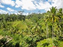Ubud, Bali. Rice fields at Ubud village, Bali, Indonesia stock image