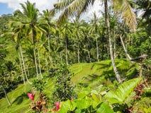Ubud, Bali Stock Photos