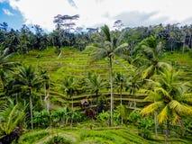 Ubud, Bali Stock Photography